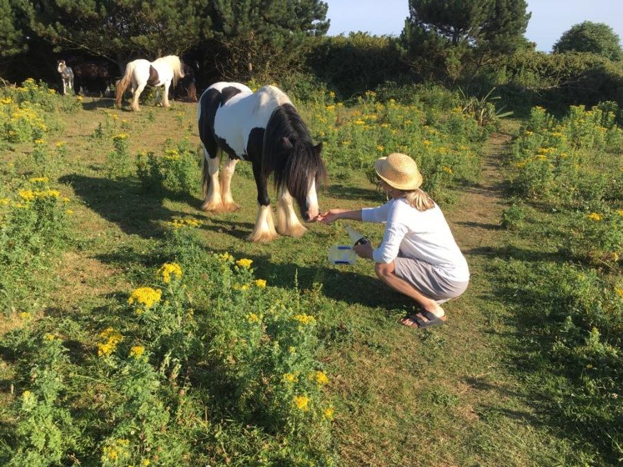 Horse & Me
